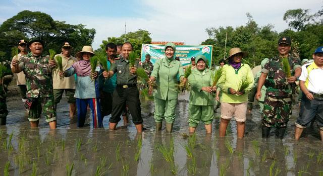 Kodim 0826 Pamekasan bersama Dinas Pertanian dan Masyarakat menanam padi lahan tidur, guna meningkatkan produksi hasil pertanian.
